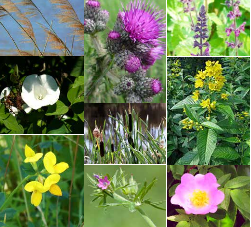 images of a variety of summer plants